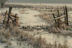 Edgar Feldmanis-Frosty Dawn-10